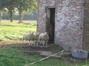 2004-09-07 schapenhok asbroek (1)